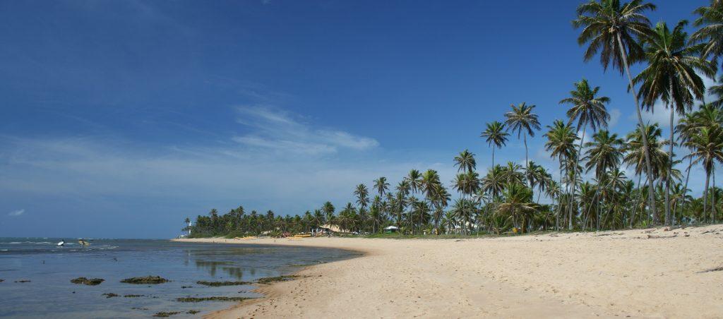 plage et cocotiers Praia do Forte