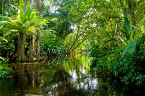 Amazonie au fil de l'eau des Igarapes