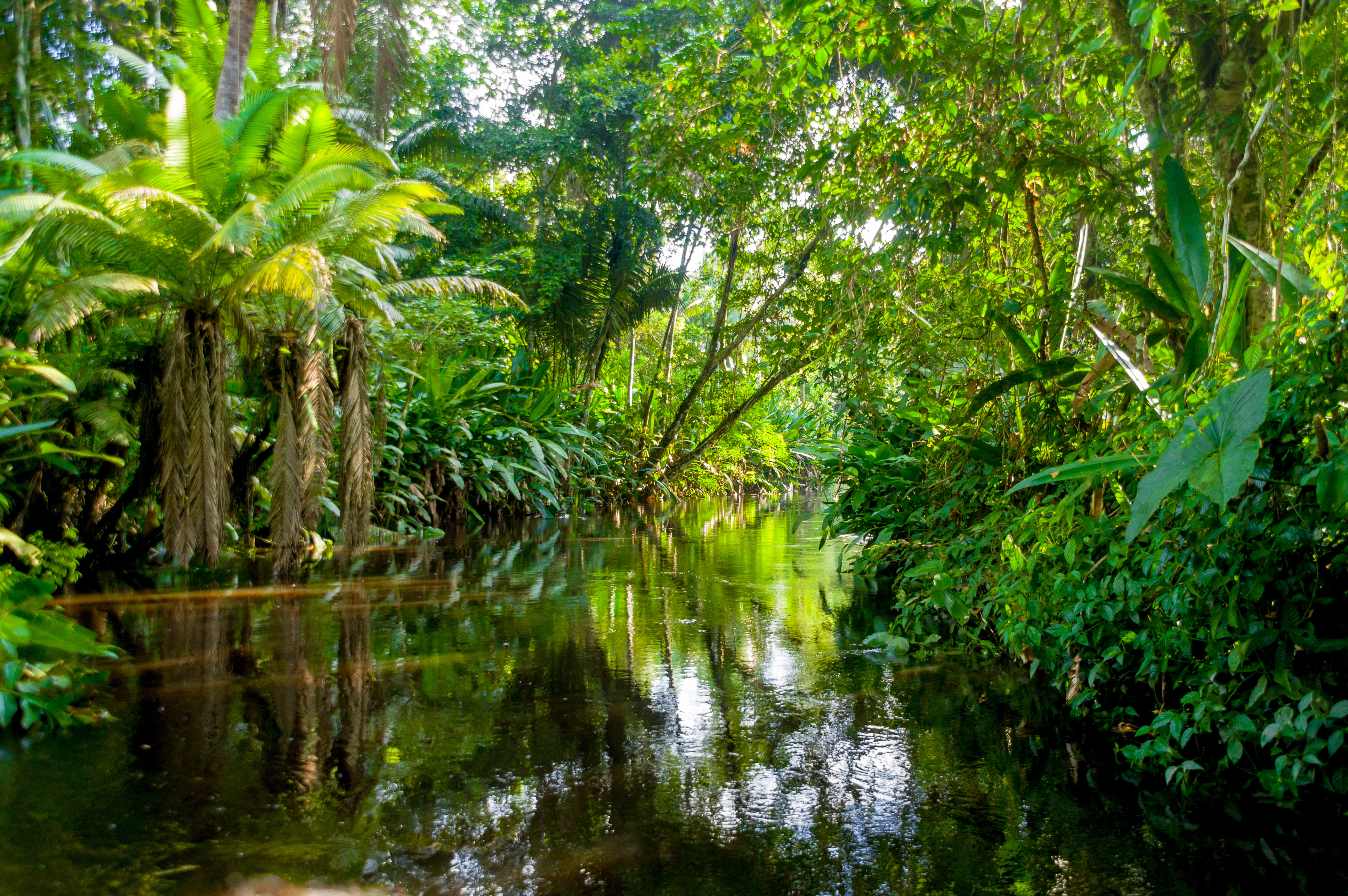 13-Amazonie