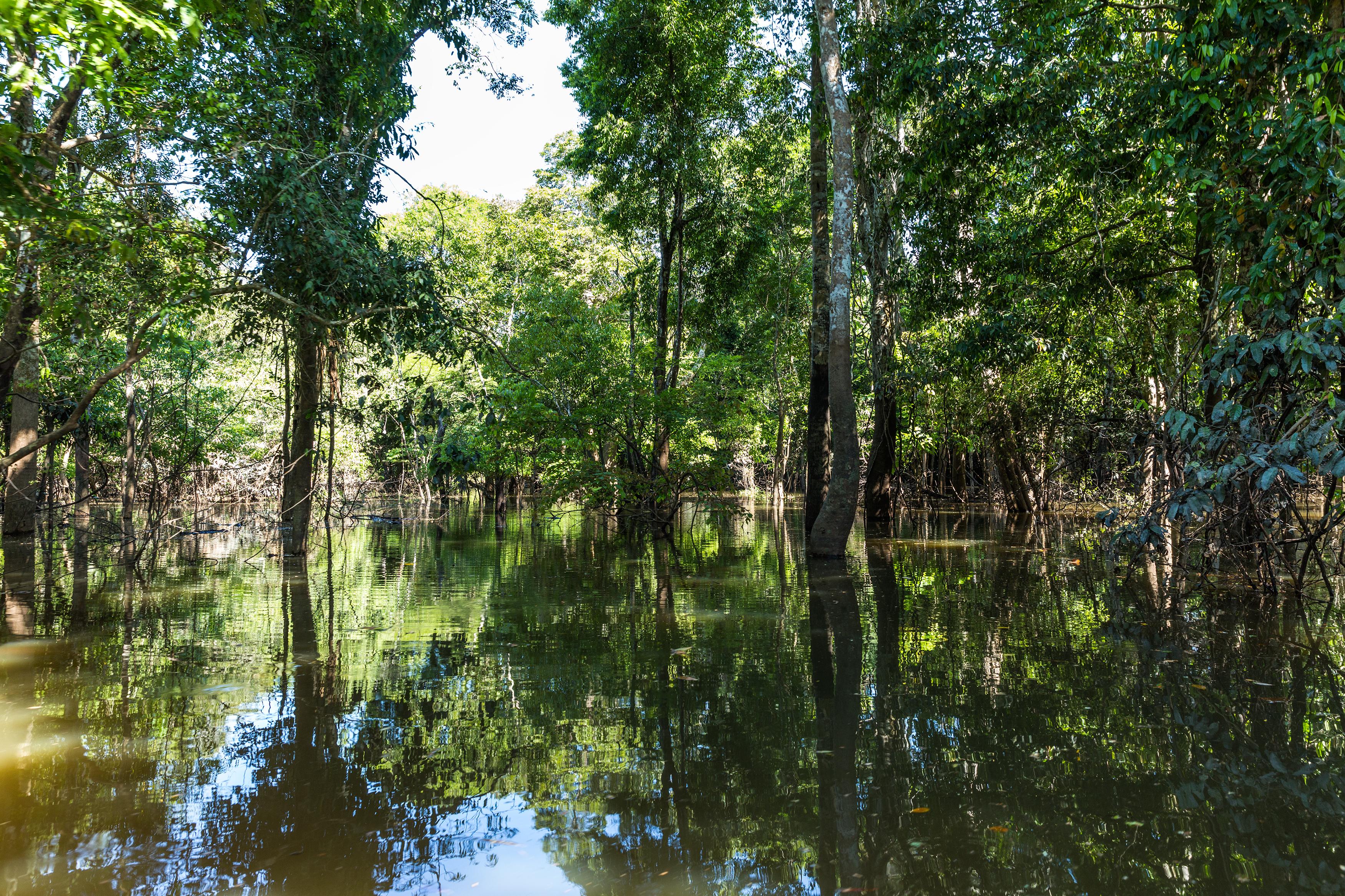 Amazonie forêt inondée