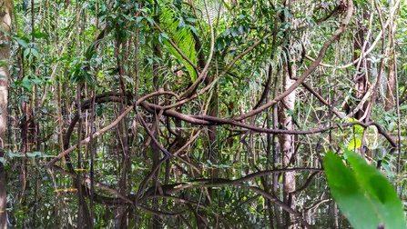 croisiäre Amazonie