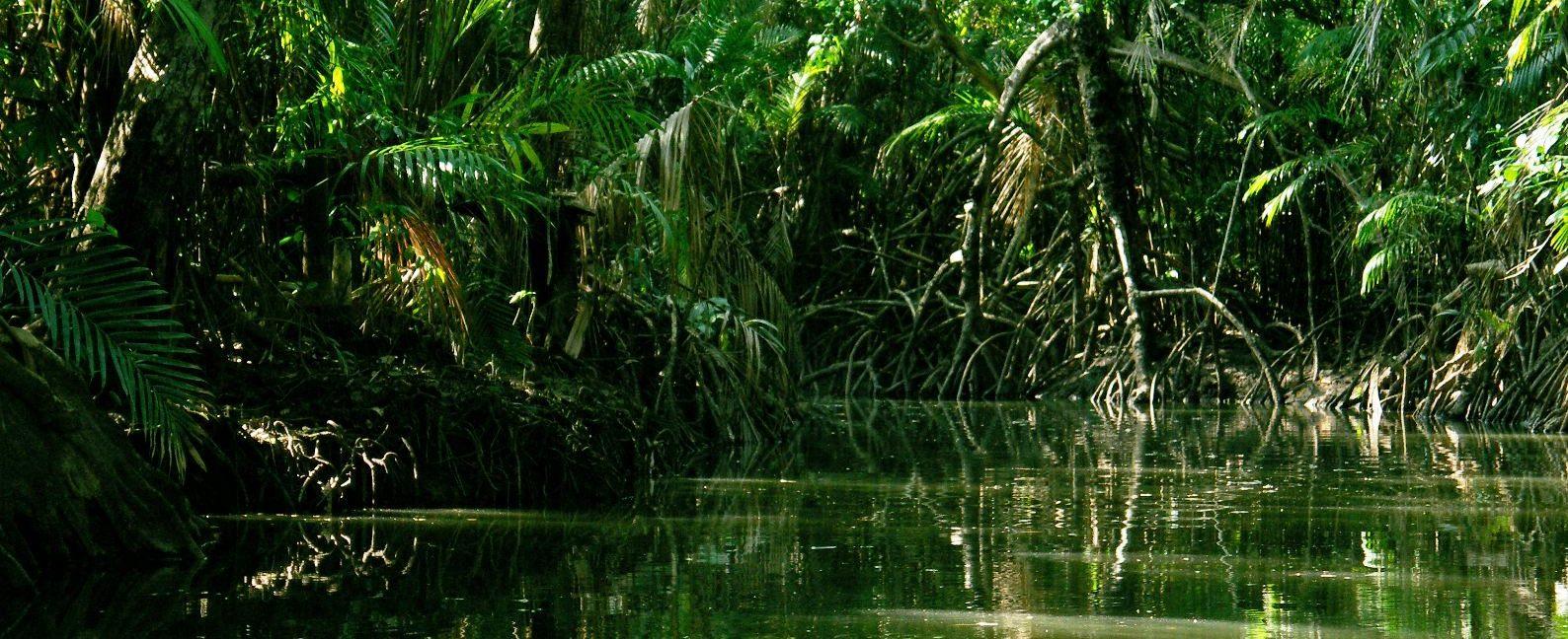 Amazonie plantes tropicales