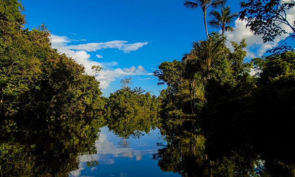 Amazonie reflet arbres dans igarape