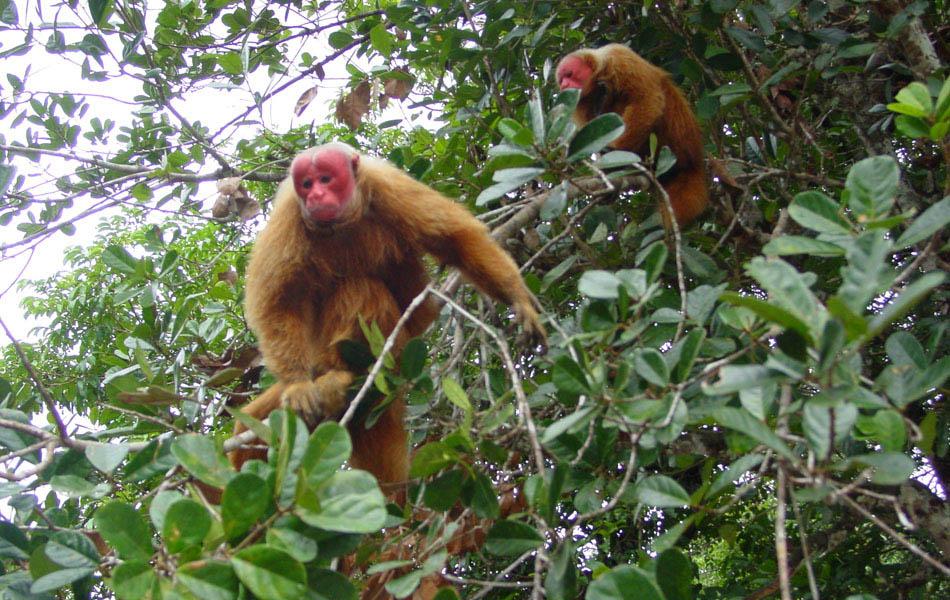 forêt des singes