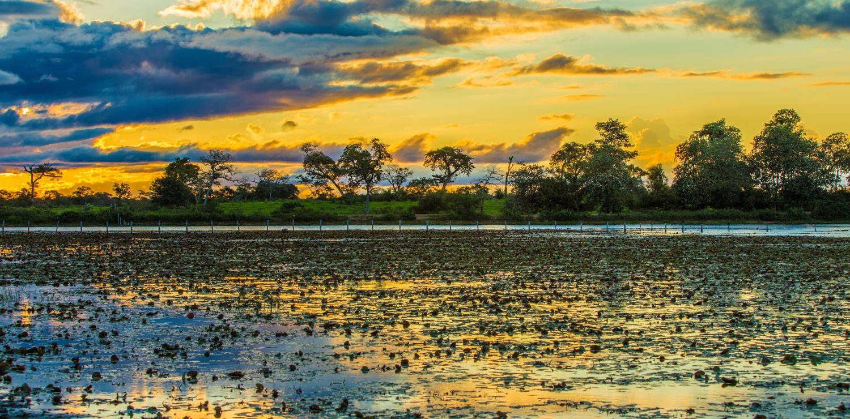 coucher de soleil sur Pantanal