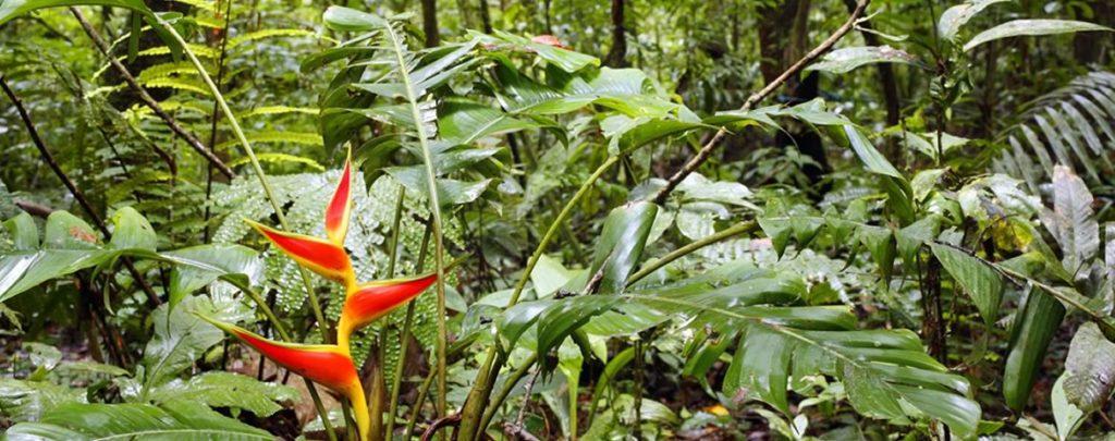 fleur forêt Amazonie