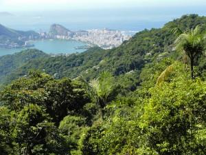 Foreˆt de  Tijuca Rio de Janeiro