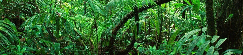 détails de jungle