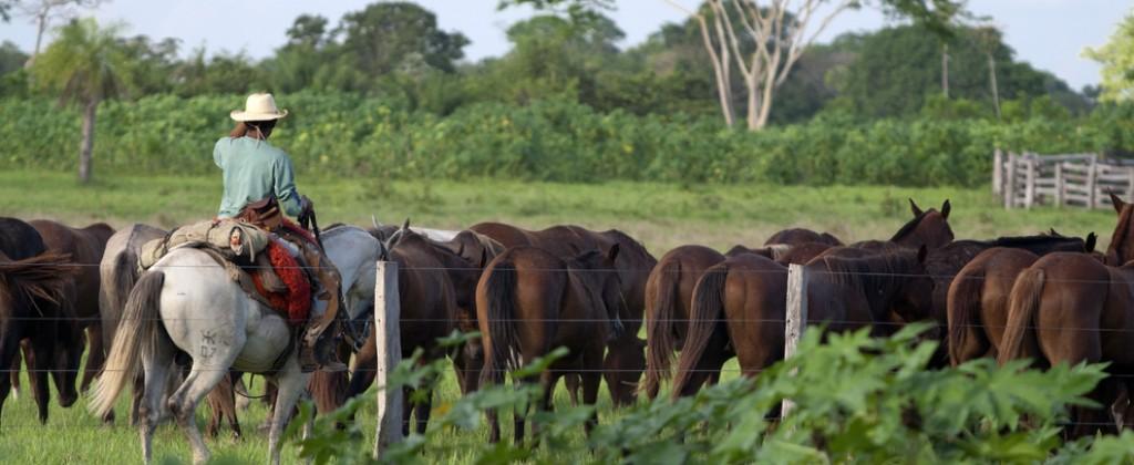 Pantanal gauchos