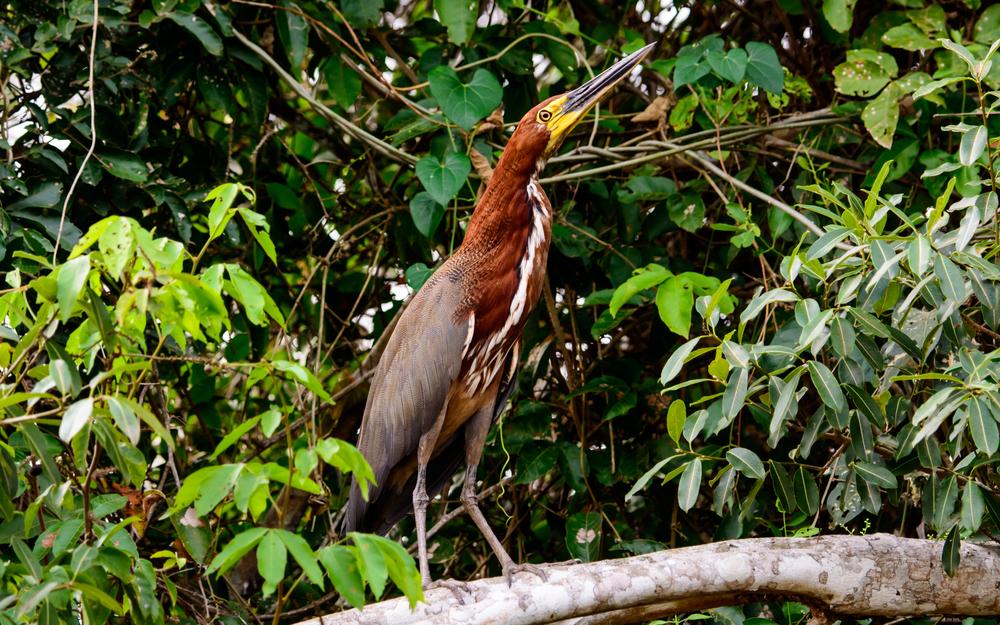 5-Pantanal