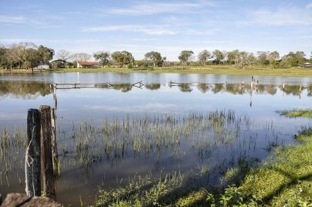 Pantanal(2)