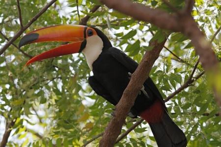 Pantanal(3)