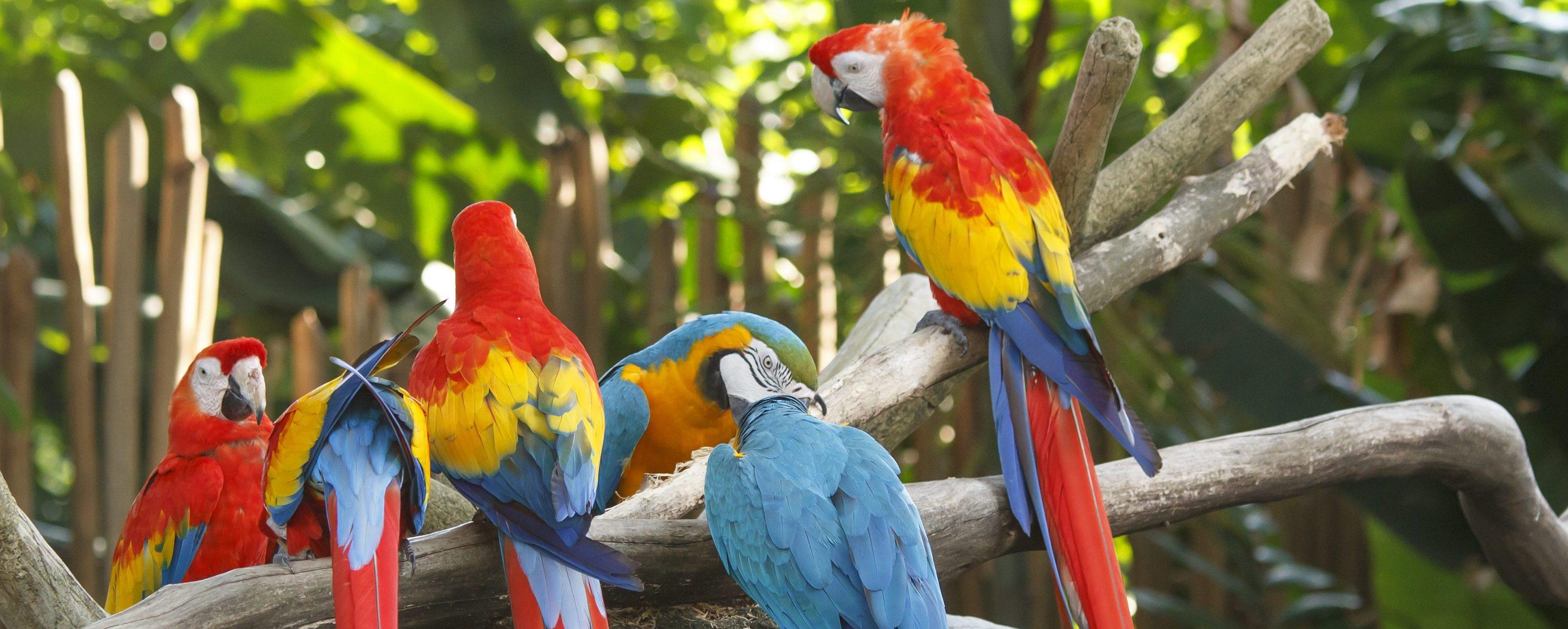 Parc aux oiseaux Iguaçu