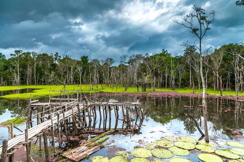balade bateau Pantanal