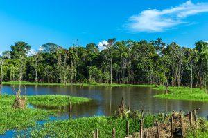 terre inondée pantanal