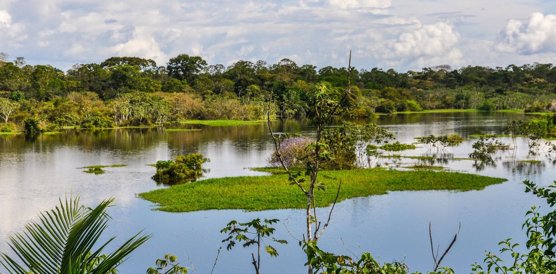 vison aquatique forêt Amazonie
