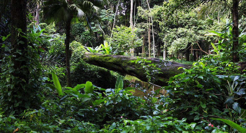 Amazon_dans la forêt