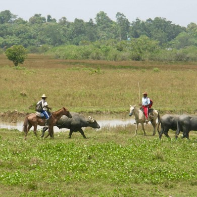 Cow-boys Ile de Marajo