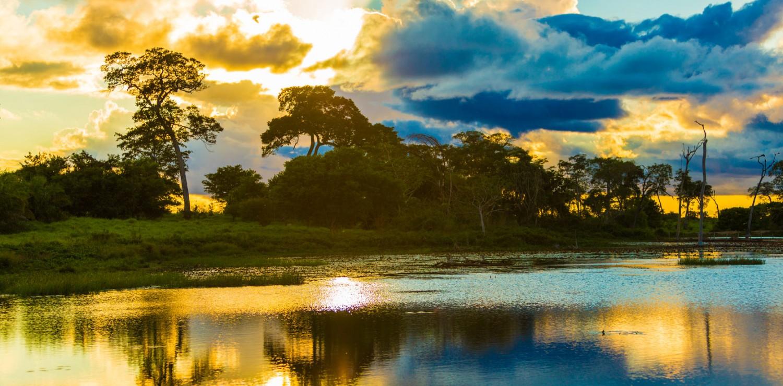 végétation Pantanal nord