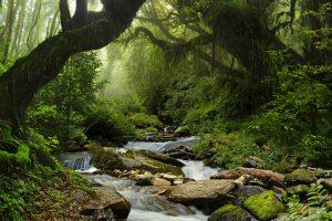 Amazonie beauté et fraicheur de la végétation