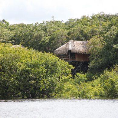 Amazonie bungalow juma lodge à travers les arbres