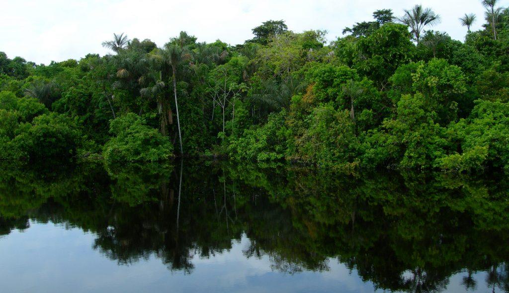 Amazonie Reflet de la forêt dans l'eau