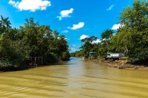 Amazonie remontée de l'Igarape à marée basse