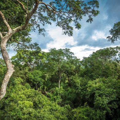 Arbres forêt tropicale Amazonie