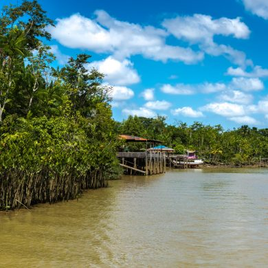 canaux et mangrove Belem