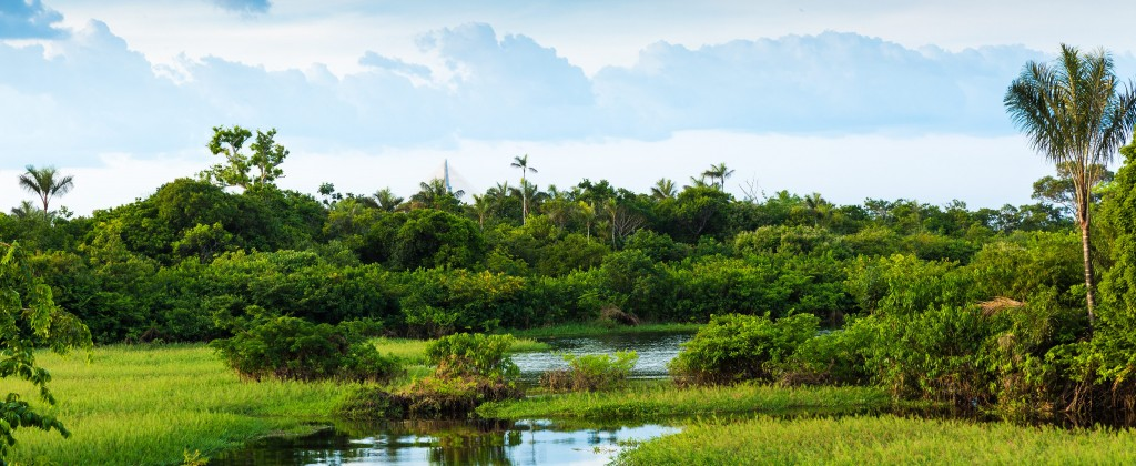 beau paysage du Pantanal