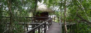 passerelle vers bungalow Juma lodge Amazonie