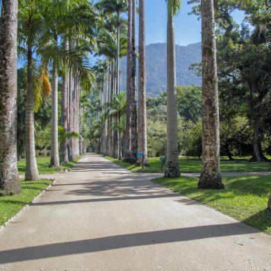 Rio de Janeiro allée jardin botanique