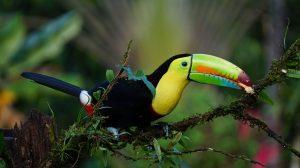 Toucan parc oiseaux Iguaçu