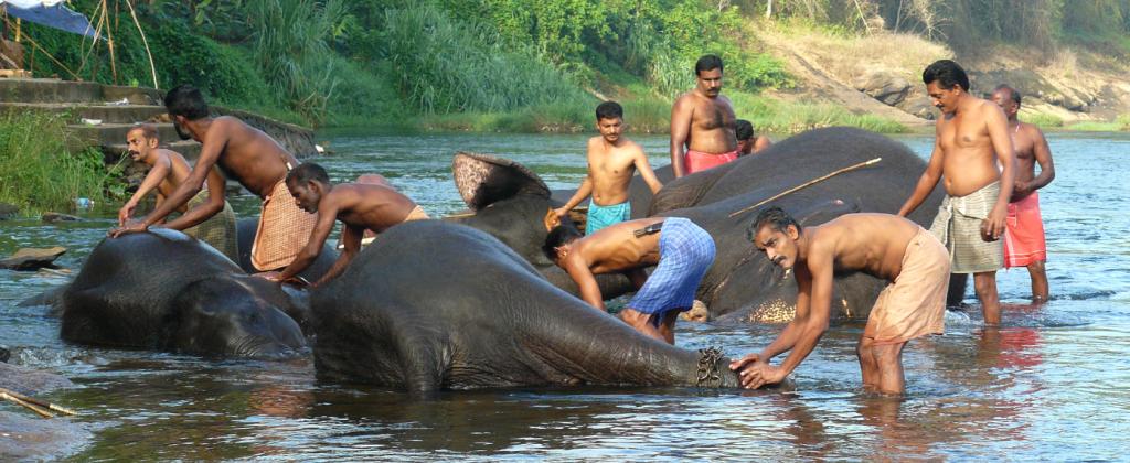 bains des éléphants