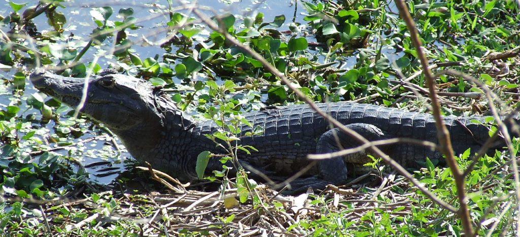 Bonito e Pantanal (67)
