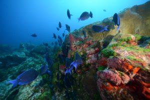 recif sous marin à Fernando de noronha