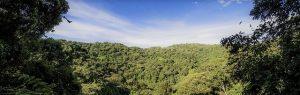 jungle amazonienne