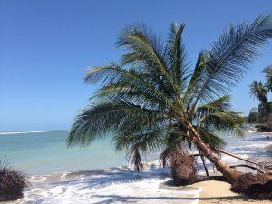 gros plan cocotier sur plage costa rica